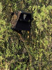 (macg33zr) Tags: organisation rspb fowlmere animal bird barnowl