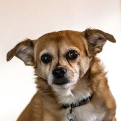 joanszoo20Apr20190023 (fredstrobel) Tags: animals atlanta dogs ga mytownhouse places sophie pets usa