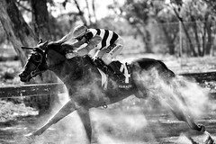 outback racing (gro57074@bigpond.net.au) Tags: easter country northwestnsw outbackracing dusty 2019 april f40 70200mmf28 d850 nikon grain monochromatic monochrome monotone mono bw blackwhite jockey horserace race nsw lightningridge