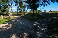 Choices (Nelleke C) Tags: 2018 buitenlandsweekend döhle lüneburgerheide duitsland germany heathland heide holiday landscape landschap road vakantie weg