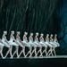 Mariinski Ballett