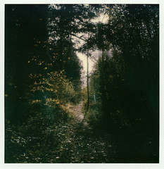 Stansted Forest - I (Skink74) Tags: colorsx70 england film instant polaroid polaroidlandcamera polaroidoriginals stanstedforest sussex sx70 sx70alpha1se uk westsussex polaroidweek2019 roidweek polaroidweek