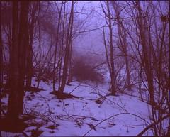 (✞bens▲n) Tags: mamiya 7ii velvia 100 80mm f4 film analogue 6x7 positive japan nagano woods trees snow nature