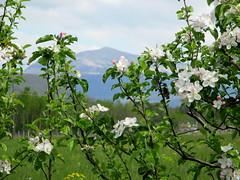BUONA PASQUA! (Eli.b.) Tags: panorama pasqua landscape primavera fiori alberi rami flowers spring printemps