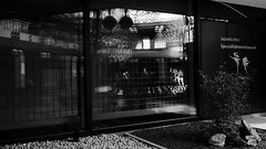 reflection@window of japanese restaurant, Düsseldorf (Amselchen) Tags: city street streetphotography streetsnap people pedestrians bnw blackandwhite mono monochrome panasonic germany light shadow reflection lmonochromed panasonicdcgx9 lumixgvario1232f3556