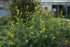 _1011176.jpg (plasticskin2001) Tags: flower micronikkor f28s ai 55mm