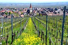 Ammerschwihr (Haut-Rhin, F) (pietro68bleu) Tags: alsace village églisebaroque vignoble colza