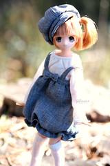 Kinoko ♥ (Siniirrphotography) Tags: azone doll dolls siniirr photography little maid chisa xs kawaii cute pureneemo
