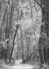Le chemin (david49100) Tags: 2019 90mm avril maineetloire seichessurleloir tamron90mm arbres bw chemin d5100 forest forêt nb nikon nikond5100 path tamron trees