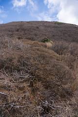 20190417a73_7387 (Gansan00) Tags: ilce7m3 α7ⅲ sony japan 大分 oita 日本 九重連峰 登山 landscape snaps ブラリ旅 04月 fe24105f4 trekking travelphotography 山