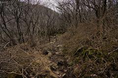 20190417a73_7369 (Gansan00) Tags: ilce7m3 α7ⅲ sony japan 大分 oita 日本 九重連峰 登山 landscape snaps ブラリ旅 04月 fe24105f4 trekking travelphotography 山