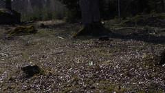 Fleeting moments pt 4 (Mattias Lindgren) Tags: nikon d600 sweden 50mm f18 fleeting moment butterflies spring 50mmf18 nikond600 fleetingmoment