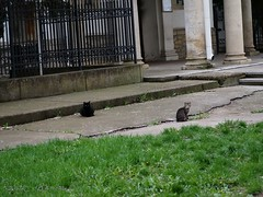 107/365 (ralux2004) Tags: 365daysfrom2019 spring april street cats building