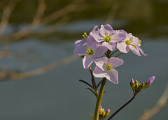 Promenade au bord de l'eau - Walk by the water (olivier_kassel) Tags: fleur flower canal eau water branches branch closeup proxy