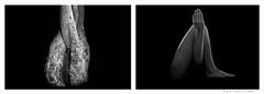 Curious Diptychs - Pareja IV (Frances CdeB) Tags: leg hands plant diptychs blackandwhite dark drama