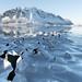 Ice Blossoms - Lofoten