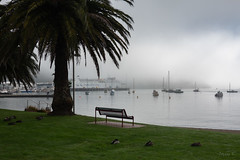 Sleeping Ducks (Jocey K) Tags: newzealand southisland marlborough picton sea water hills clouds ship ferry bench seat ducks palmtree boats fog sky