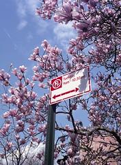 Spring (triebensee) Tags: bronicarf645 zenzanon 65mm f4 fujifilmpro400h tetenal c41 epsonv700 film mediumformat 6x45 selfdeveloped