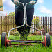 Person Mowing Grass With Hand Powered Lawn Mower