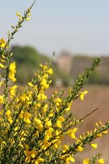 IMG_0410 (picolo_rasco@hotmail.com) Tags: nature fauna flora damme belgium