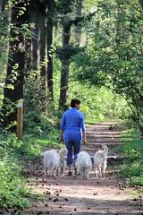 IMG_0407 (picolo_rasco@hotmail.com) Tags: nature fauna flora damme belgium