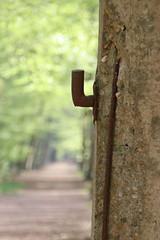 IMG_0392 (picolo_rasco@hotmail.com) Tags: nature fauna flora damme belgium