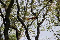 IMG_0390 (picolo_rasco@hotmail.com) Tags: nature fauna flora damme belgium