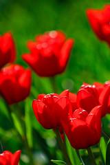 Pünktlich zu Ostern, wünsche ich euch mit diesem Bild, schöne Feiertage und eine tolle Zeit bei und mit eurer Familie.  Das Bild entstand im botanischen Garten in Augsburg. Dort habe ich soooo viele Fotos gemacht, das ich mich kaum für eins entscheiden ko (sejo.nuhanovic) Tags: igdeutschland landschaftsfotografie igphotography natur igflowers naturephotography canoneos750d canon igpotd beautiful tulpe potd flowers nature hobbyfotograf sarahusejo nsejo canoneos adventure tokina1116 ignature botanischergarten abenteuer augsburg tulpen igfotoclub iglandscape photography landscape iggermany
