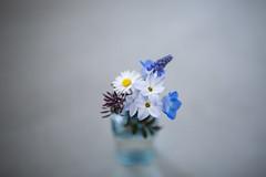 (minato) Tags: home 5d distagon flower