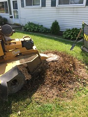7154153A-C37B-4764-83EE-7CD3CB921B98 (Lakeview Stump Grinding) Tags: lakeview columbia strongsville stump grinding ohio station north royalton cleveland berea olmsted falls landscaping bay village northeast service grind removal