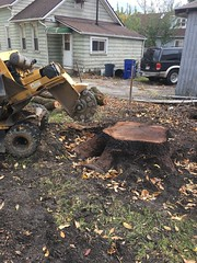 30CF4121-A322-43B1-AE68-86A2769370E7 (Lakeview Stump Grinding) Tags: lakeview columbia strongsville stump grinding ohio station north royalton cleveland berea olmsted falls landscaping bay village northeast service grind removal
