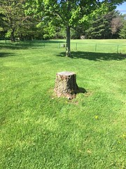 9DE1E84C-C3F5-440C-ABEC-9DDD5612A7E8 (Lakeview Stump Grinding) Tags: lakeview columbia strongsville stump grinding ohio station north royalton cleveland berea olmsted falls landscaping bay village northeast service grind removal