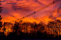 Sunset-6 (TheseusPhoto) Tags: sunset colors beautiful cloudscape clouds sun light dusk goldenhour trees newengland color silhouette phantasmagoria colorful