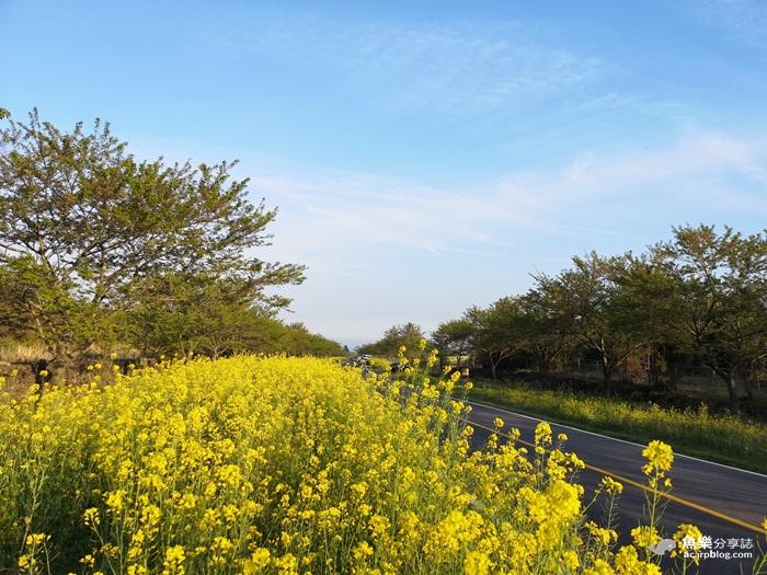 【韓國旅遊】濟州島五天四夜行程規劃懶人包(機票、住宿、行程、交通) @魚樂分享誌