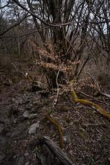 20190417a73_7424 (Gansan00) Tags: ilce7m3 α7ⅲ sony japan 大分 oita 日本 九重連峰 登山 landscape snaps ブラリ旅 04月 fe24105f4 trekking travelphotography 山