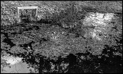 DSC03953-Modifier (patricklardeau) Tags: 40mm a7rii arboretum assemblages chatenaymalabry voigtlander