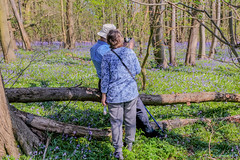 Piles Coppice 21st April 2019 (boddle (Steve Hart)) Tags: piles coppice 21st april 2019 steve hart boddle steven bruce wyke road wyken coventry united kingdon england great britain canon 5d mk4 6d 100400mm is usm ii 2470mm standard 85mm f14 prime 815mm fisheyes lens wideangle wide angle wild wilds wildlife life nature natural bird birds flowers flower fungii fungus insect insects spiders butterfly moth butterflies moths creepy crawley winter spring summer autumn seasons sunset weather sun sky cloud clouds panoramic landscape unitedkingdom