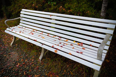Colorful bench (kuyu-peach) Tags: 2018 afsnikkor28mmf14eed autumn kinosaki nikond850 bench colorful fall green japan leaves orange prime primelens red stone travel tree
