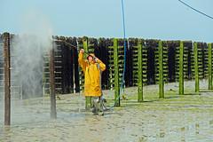 Nettoyage de printemps (Arnadel) Tags: baiedestbrieuc jospinet sea stakes planguenoual bouchots mussels mussel tide seafood mer pieux moulesmarinires moules marée fruitsdemer ciré jaune karcher