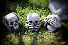 Hear no Speak no Say no  Garden Show (psychosteve-2) Tags: skulls stone garden seenoevil