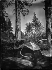 Favorite Thing (Blurmageddon) Tags: ammoniumthiosulfate alternativeprocess epsonv700 5x7 largeformat wetplatecollodion camping tent nature landscape collodionnegative idyllwildcalifornia
