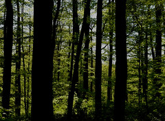 trees (mags_Tag) Tags: trees pyhra loweraustria earthday wald forest wood woods twentyonepilots green heuberg
