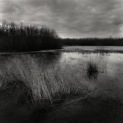 The reserve Smychek, floodplain of the Dnieper River, Belarus. 2019 | St.1bw (artsiom.khalandach) Tags: belarus dnieper smychek bronica fomapan 400