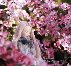 A different view 🌸 (pure_embers) Tags: pure laura embers porcelain bjd doll dolls england uk girl shirrstone shelter urban pigeon pureembers photography photo ball joint portrait fine art trees sunshine sun pink blossom