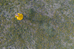 Yellow, yellow, yellow (piotr_szymanek) Tags: agnieszka woman outdoor drone fromabove meadow yellow dress 20f agnieszkal 1k 5k 50f 100f 10k 20k