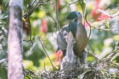 Herons (proyectoasis) Tags: