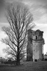 Parallels / Параллели (Boris Kukushkin) Tags: cathedral blackandwhite tree руины чб дерево ruins