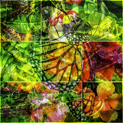 Happy Earth Day (soniaadammurray - On & Off) Tags: digitalphotography manipulated experimental collage picmonkey photoshop abstract nature earth earthday celebration tribute save cherish love carefor act speak appreciation artchallenge
