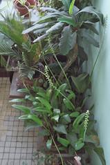 DSCF4711 (Mike Pechyonkin) Tags: 2019 moscow москва plant растение leaf лист hallway подъезд лестничнаяплощадка