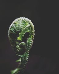 New Growth (miroto2014) Tags: celywoods fern plantmacro plants leaf
